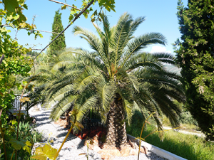 Palm trees in the sculpture garden