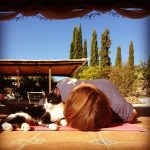 Savasana with our cat Angel Gabriel