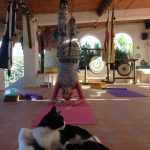Cats on yoga mats